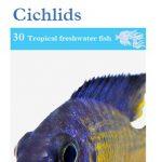 OATA African Malawi Cichlids