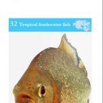 OATA aggressive fish species information sheet