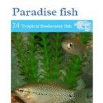 OATA Bettas, Gouramis & Paradise fish