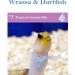 OATA Blennie, Gobies, Jawfish, Dwarf Wrasse and Dartfish care sheet