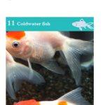 OATA Fancy Goldfish