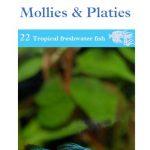 OATA Guppies, Swordtails. Mollies & Platies