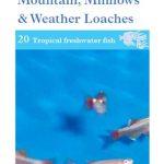 OATA Hillstream Loach care sheet