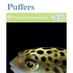 OATA Monos, Scats, Archer Fish and Puffer fish care sheet